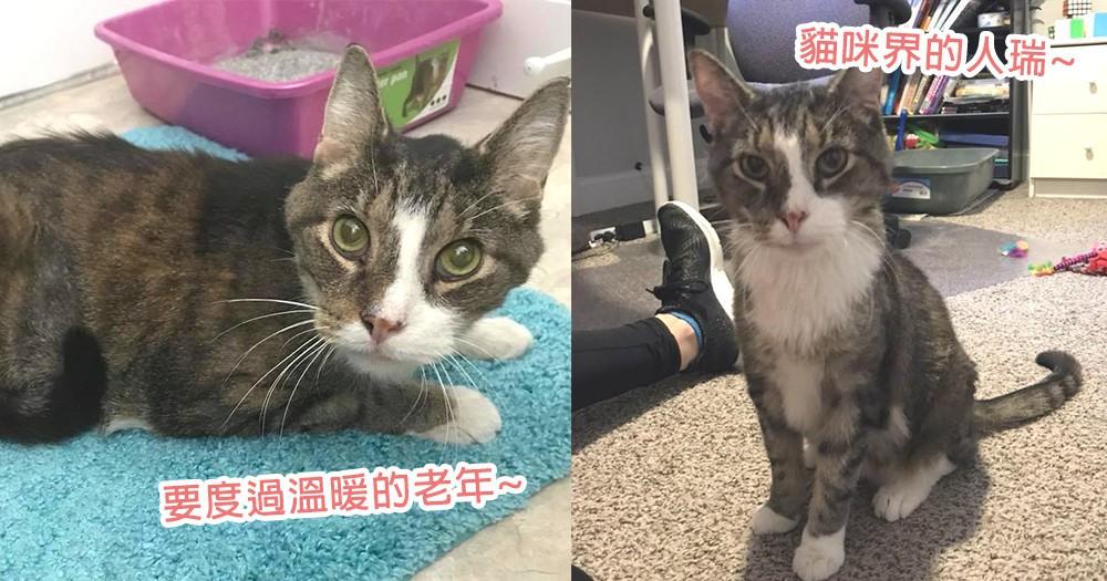 貓咪界的人瑞來了!26歲貓星人2天時間成功被領養回家,溫暖又幸福地度過老年時光~