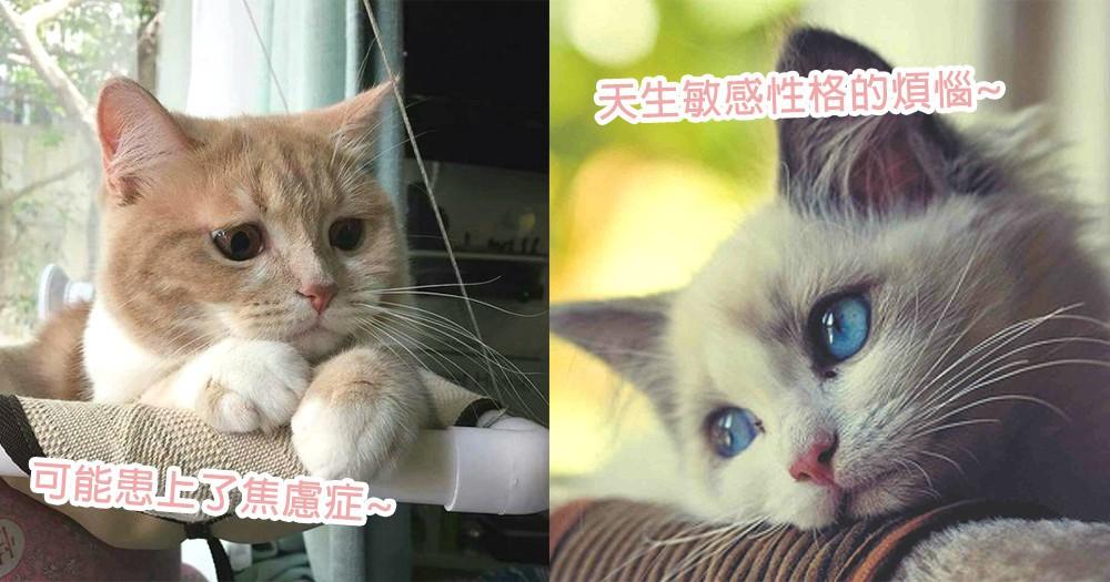 貓星人也會患上精神病!7個貓咪們可能患上焦慮症症狀,天生敏感性格帶來的壓力~