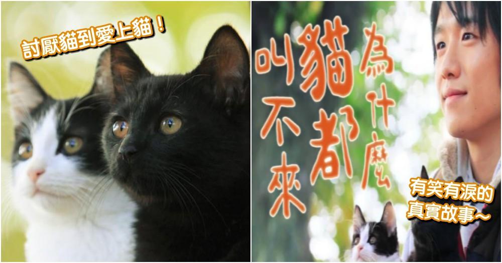 貓奴成長史!《為什麼貓都叫不來》 落魄拳擊手 變身 暢銷貓咪漫畫家~真摯電影感動萬人!