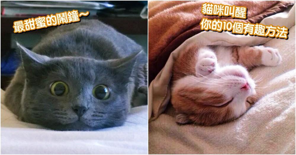 最甜蜜的鬧鐘!10 個貓咪叫醒主人的有趣方法,你家的是哪一種呢?