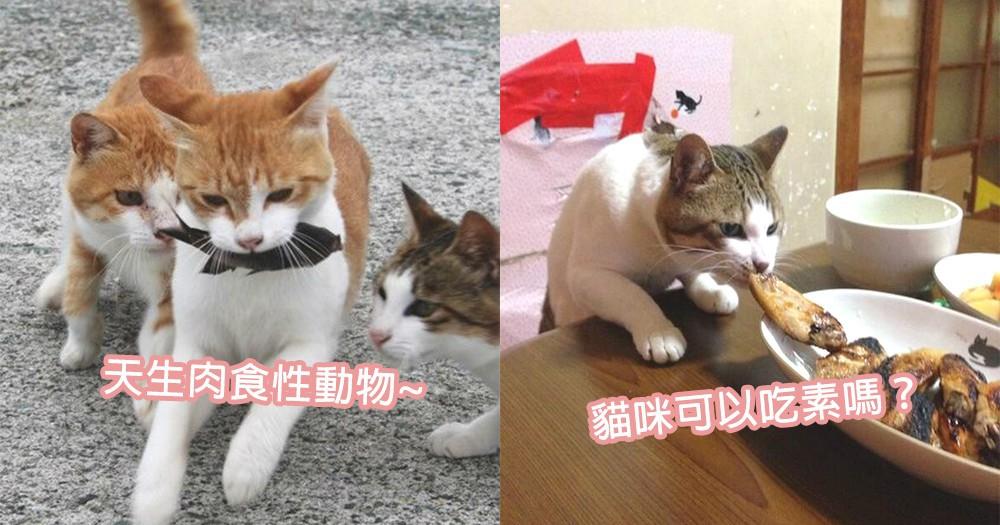 貓咪可以成為素食者?長期吃素對貓星人的大問題!果然是天生的肉食性動物~