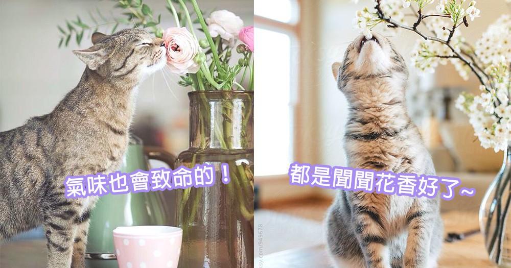 嗅氣味也會致命!貓咪們討厭的4大危險氣味,閒時都是聞聞花香好了喔~