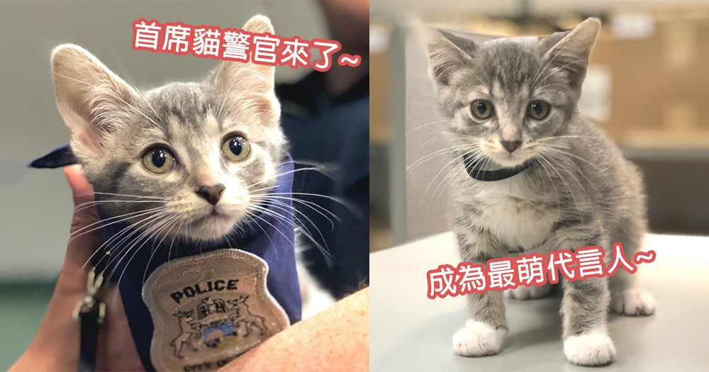 貓咪警察上任了!美國警局任命可愛小奶貓為「首席警貓」,訓練成為最出色的警察!