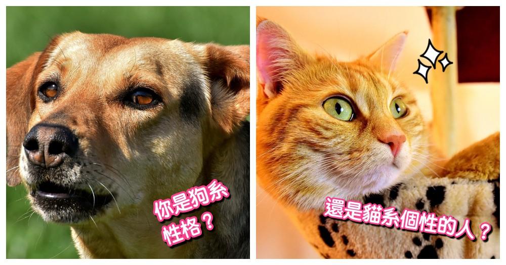 性格測驗!你是哪種類型的人?貓系 or 犬系,快來玩玩看~