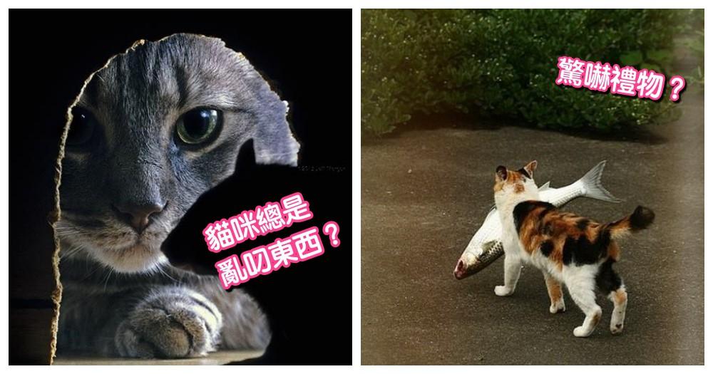 貓咪送的驚嚇禮物!為啥會抓蟑螂給主人的 3 個理由,真不忍心拒絕呀~