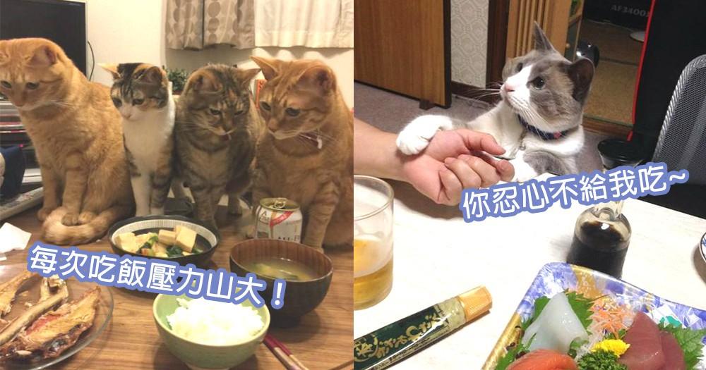 奴才吃飯也辛酸!堅守3大原則扔絕毛孩們討吃,一起來對抗貓咪們的可憐目光!