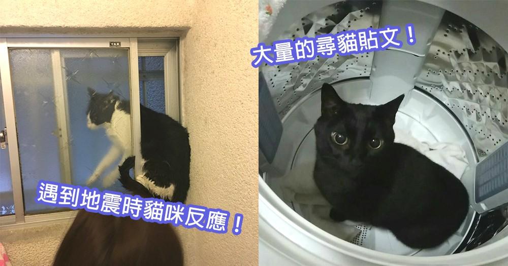 日本大阪6.1級地震!貓咪遇上地震的當下反應,願毛孩們也早日回到奴才懷抱中~