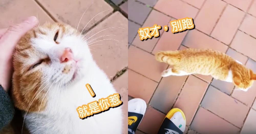 『奴才賣走!就是你惹』橘貓緊黏男孩不讓走,兩次逃跑都失敗~網暴動:還不收編!!