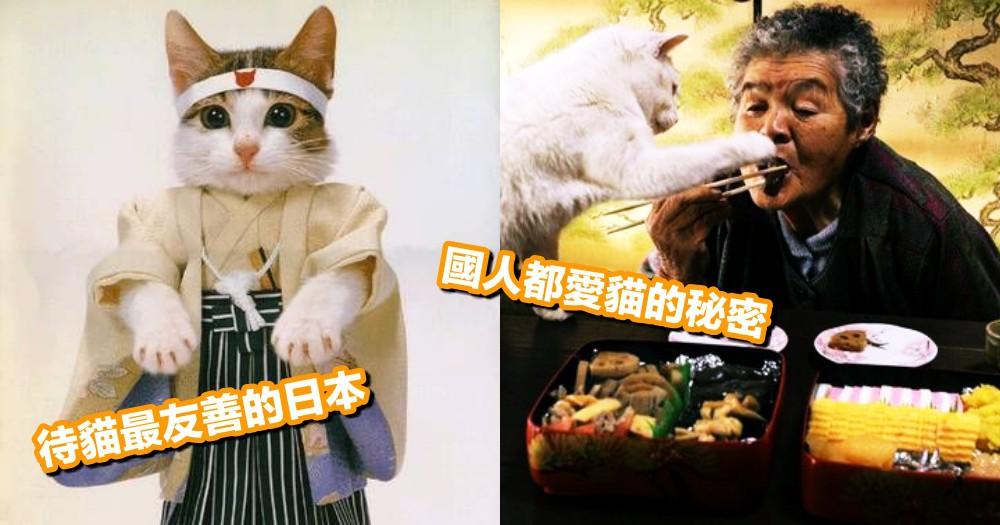 【小知識】揭秘日本人為何愛貓!對貓超友善國家,情有獨鍾的 3 個原因~