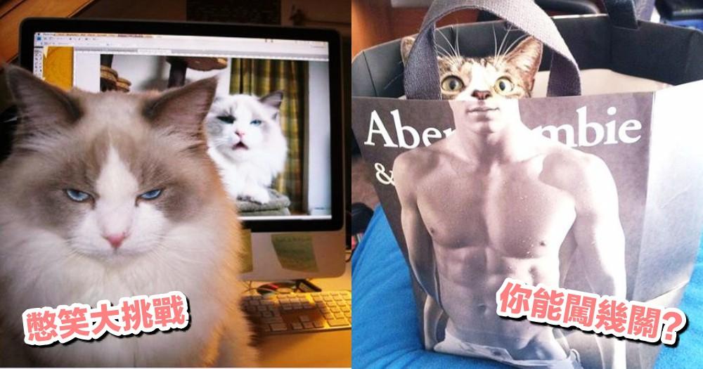 奴才憋笑大挑戰!貓貓 15 個爆笑瞬間照,看你能否堅持到最後?!