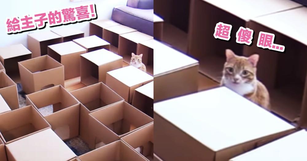 超級大驚喜!奴才準備了 50 個紙箱,想讓主子鑽個夠,結果...