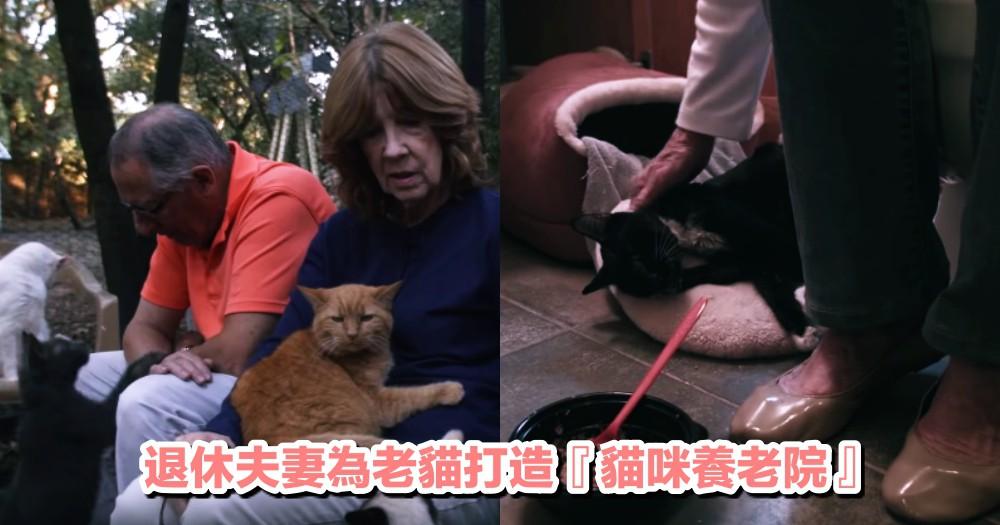 願老貓都能安穩度過餘生!美國退休夫婦收養棄貓,改建自家農場為『貓咪養老院』~