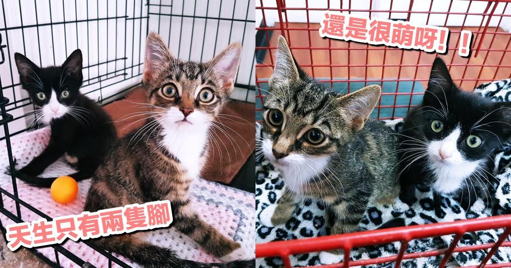 絕不服輸!兩小貓天生殘疾僅剩前腿,照樣走出牠們的『幸福貓生』~
