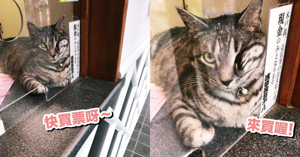 日本最萌打工仔!會抓老鼠又身兼店員,淺草演舞廳最佳守護者!