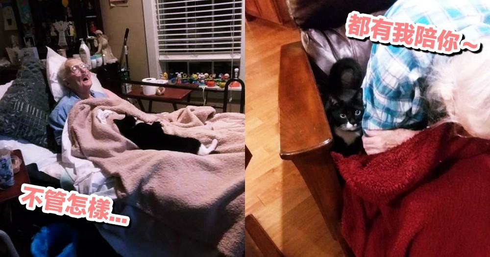 超感人!奶奶病重臥床,貓咪每天叼禮物陪伴身邊,堅持守護她到最後一刻...