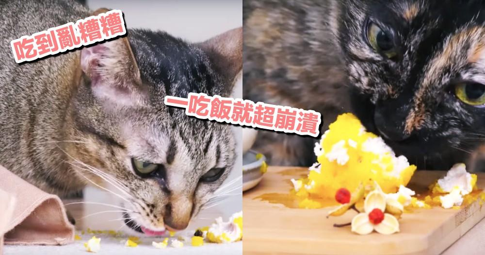 有碗不吃,偏偏喜歡弄到地上!貓貓堅持到底的 4 個原因...