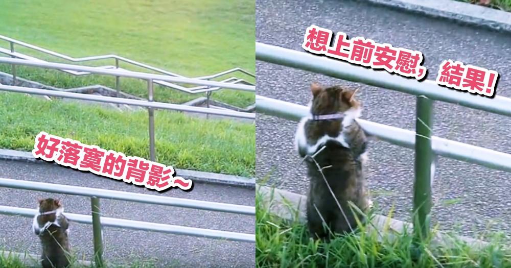 日本網友公園散步遇到喵星人,超憂鬱背影正面一看...網笑:工讀生別裝了出來!!