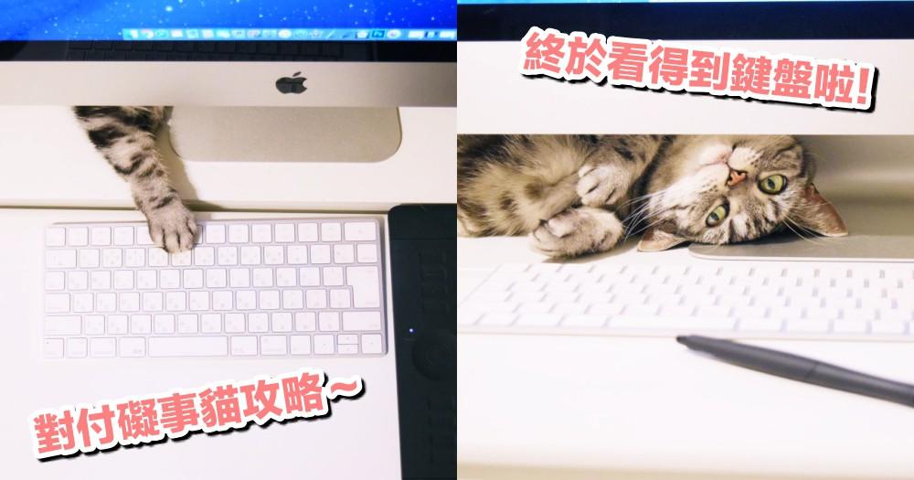 對付礙事貓攻略!推主出『妙招』解救被貓貓霸佔的電腦,網淚:終於看得到鍵盤了~