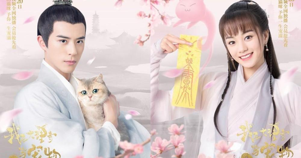 當貓咪變成古裝劇女主角!《我在大理寺當寵物》上演穿越人喵戀,不得不說喵咪顏值真的超高~