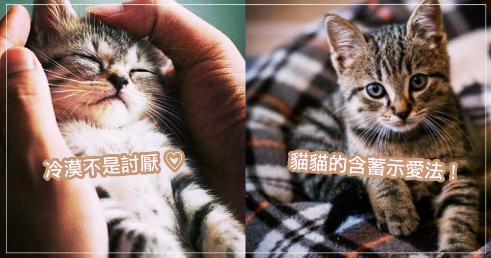 其實冷淡不等於討厭!關於貓咪愛你的 5 大行為,牠們只是喜歡得很含蓄而已啦XD