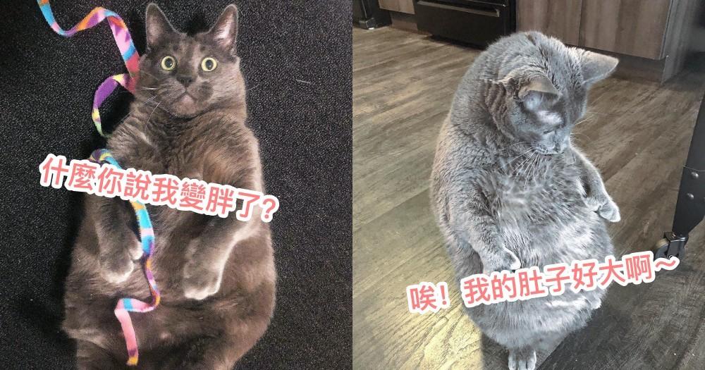 超狂『求領養情歌』!國外奴才錄製歌曲,媲美歌手級演唱,為了要領養這隻 11 公斤「霸氣胖貓」!