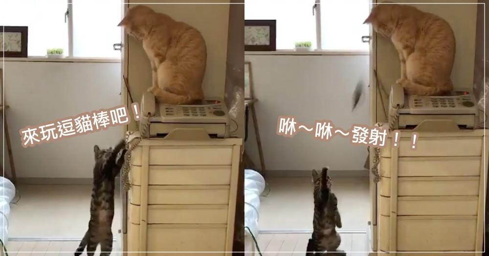 預備...發射!調皮虎斑貓把逗貓棒「當彈弓」,超衰橘貓慘被「打臉」! 網狂笑:看 10 次笑 10 次!