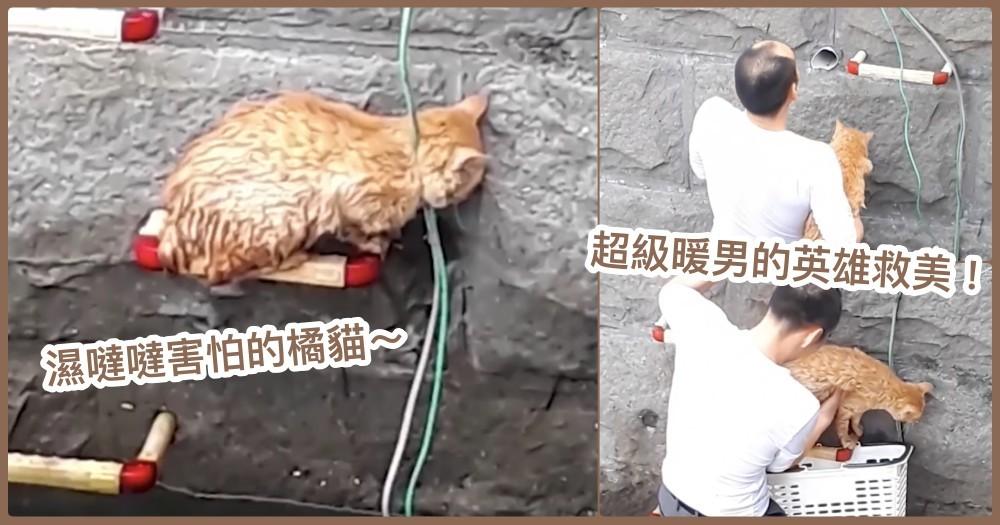 英雄救美!日本暖男脫掉西裝+襪子,赤腳營救卡在橋墩邊的橘貓   網讚:未來老公的典範♡