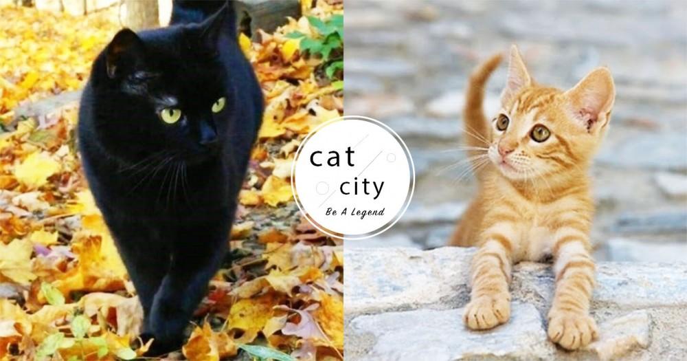 為什麼我們覺得貓比狗不友善?國際貓護理獸醫:「其實是人類誤解了貓!」
