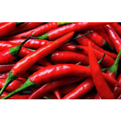 Red CHILLI Large 1