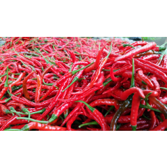 RED curly chilli