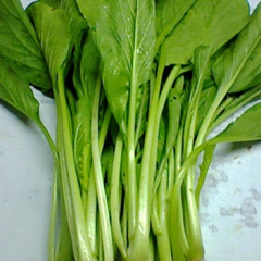 Green china cabbage-sawi hijau