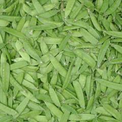 mangetout - kacang kapri