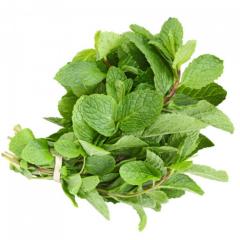 mint leaf-daun mint