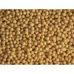 soya beans small