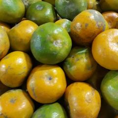 medan oranges