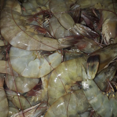 large RED PRAWNS