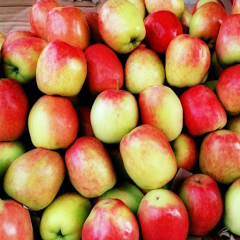 Malang APPLES