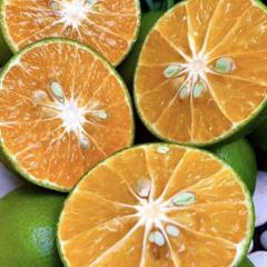 jember local oranges - manis