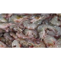 large red prawns