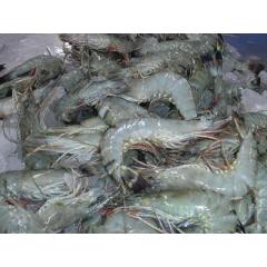 large udang prawns