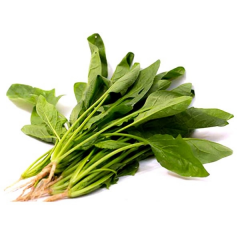 Horenso (japanese spinach)  2