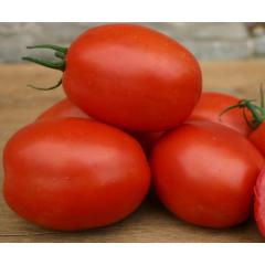 Medium Tomatoes