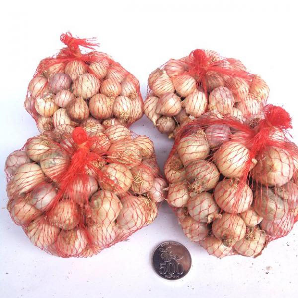 Bawang Tunggal 1 kg (varian ungu)