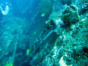 3 Bali Wreck Sites to Dive Next