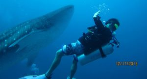 Making friends with Whaleshark at South Ari Atoll, Maldives