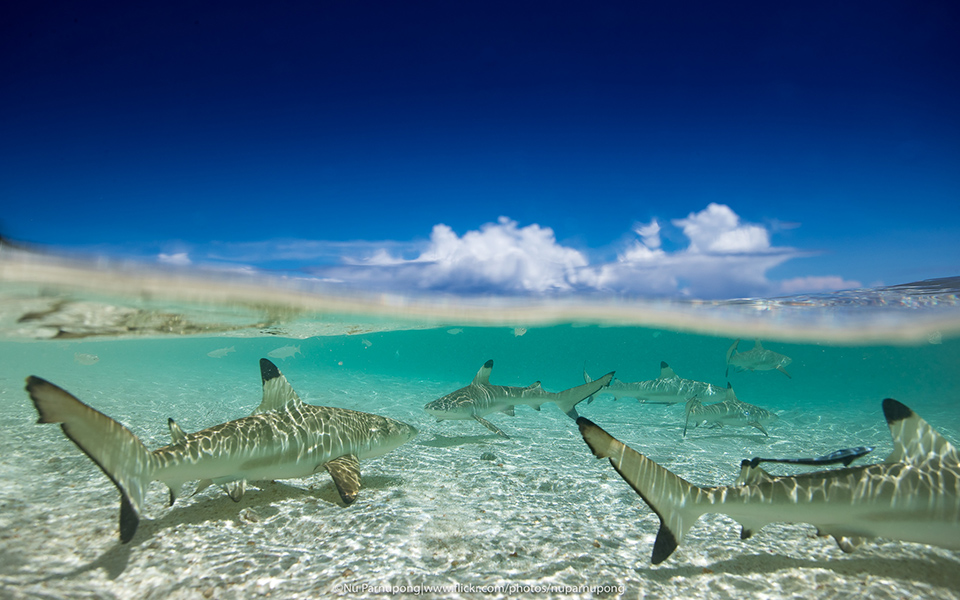 Shark Split Picture