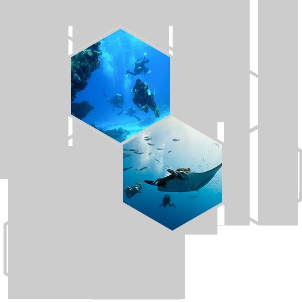 Dive-Courses-Dive-Trips
