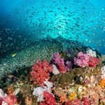 Liveaboard Dive Site - Mergui