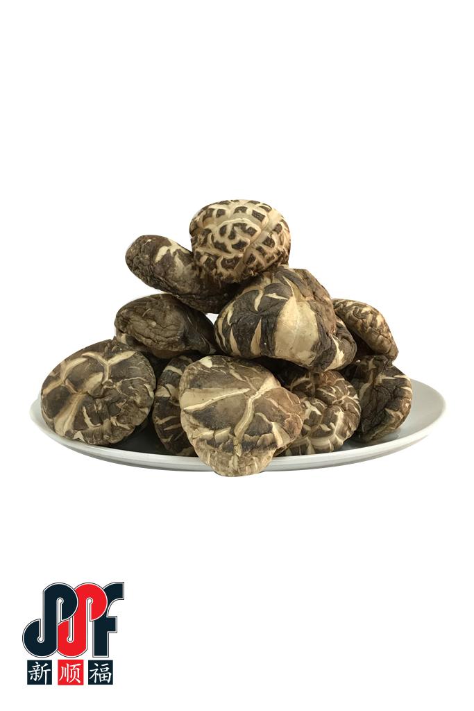 Fruitus XL-Mushroom-1.jpg