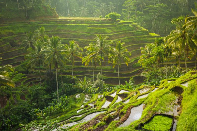 Tegallalang Rice Terrace - เที่ยวบาหลี